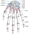 Hand bone.png