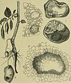 Handbuch der Pflanzenkrankheiten (1908) (14779298964).jpg