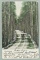 Harjutie, Harjutien korkea osa, Tarkemmin määrittelemätön paikka, 1896 PK0115.jpg
