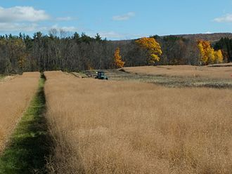 Marginal land - Switchgrass production on marginal land. Experimental plots being mowed for harvest at Cornell University (Ithaca, New York USA) in November 2016. The mixed vegetation strip to the right of the tractor shows the lower productivity of the fallow grassland that covered the site prior to planting of switchgrass in 2011.