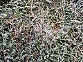 Hausdülmen -- 2009 -- 0703.jpg