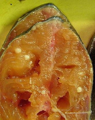Disease in ornamental fish - Henneguya zschokkei in salmon beard