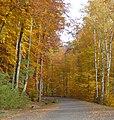 Herbstlicher Wald mit Buchen und Birken am Kurpfalz-Park - panoramio.jpg