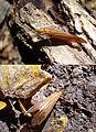 Hmyz08782.JPG