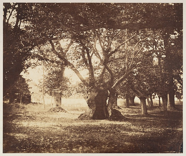 gustave le gray - image 5