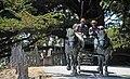 Horse drawn wagon - Fort Ross State Historic Park - Jenner, California - Stierch.jpg