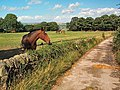 Horses near Stead - geograph.org.uk - 42657.jpg