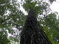 House-mountain-red-oak-tn1.jpg