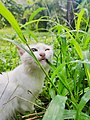 Household cat going for grass.jpg