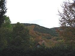 Huertgen Forest.jpg