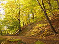 Hukvaldy, Hradní vrch, bučina 13.jpg
