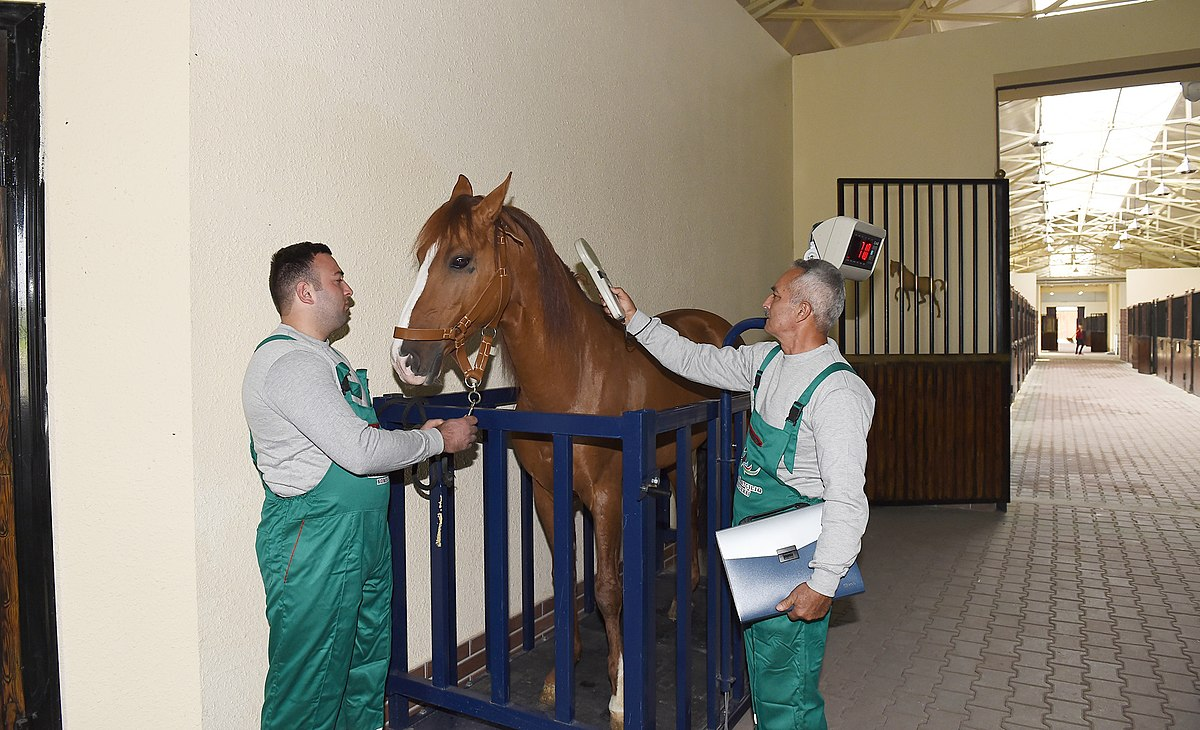 Ilham Aliyev attended opening of Qarabag Equestrian Complex 9.jpg