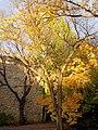 Illuminated Elm (5168378577).jpg