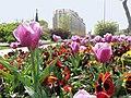 Iran, Tehran, Tehran Province, Iran - panoramio.jpg