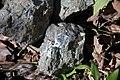 Ison Creek Kimberlite (Elliott County Peridotite, Late Cretaceous, 75 Ma; west of Stephens, Elliott County, Kentucky, USA) 7 (48383168252).jpg