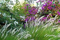 Israel-04643 - Colours and Textures (32821102394).jpg