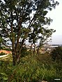 Itupeva - SP - panoramio (170).jpg