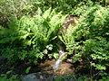 Ivó pataka, Hargita - 2013.06.17 (13).JPG