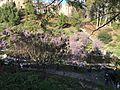 Japanese Friendship Garden (Balboa Park, San Diego) 19 2016-05-14.jpg