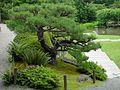 Japanese Garden (16045105882).jpg