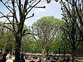 Jardin du Luxembourg, Paris April 2008 002.jpg