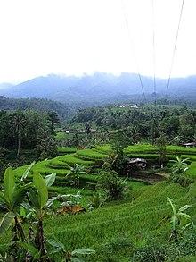 Terrace agriculture for Terrace farming diagram