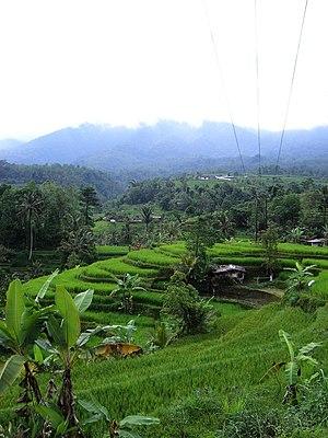Terrace (agriculture) - Rice terraces, Bedugul, Bali.