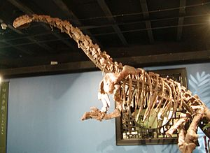 Jingshanosaurus - Skeleton of Jingshanosaurus sinwaensis at the Beijing Museum of Natural History.