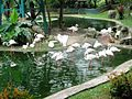 KLBP Flamingo 2.jpg