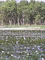 Kakadu, 2004 - panoramio (1).jpg
