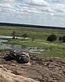 Kakadu the land of solitude.jpg