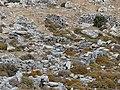 Karphi 34.jpg