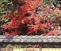 Katsunumacho Shimoiwasaki, Koshu, Yamanashi Prefecture 409-1313, Japan - panoramio (2).jpg