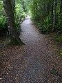 Kepler Track, New Zealand (78).JPG