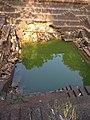 Kerala temple pond .jpg