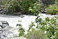 Kern River11.jpg