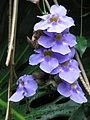 Kew Gardens - London - September 2008 (2955601084).jpg