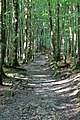 Klöntalersee - panoramio (14).jpg