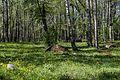 Koplipargi kivi. 1.jpg