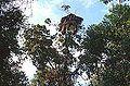 Korowai treehouse.JPG