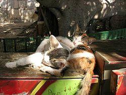 Volně chované kočky