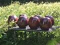 Kraitz Röda äpplen 2007.jpg