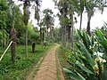 Kunming Botanical Garden - DSC03090.JPG
