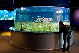 L'Oceanogràfic - Mediterranean seagrass aquarium