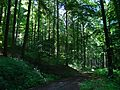 LSG 378517, Stadt Kassel, Quelberg, 4, Wolfsanger-Hasenhecke, Kassel.jpg