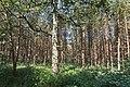 LSG Forst Rundshorn nahe Würmseeweg IMG 9889.jpg