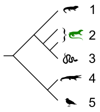 Lacertilia cladogram.svg