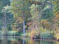 Lake Atsion 2.jpg