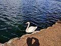Lake Eola (30073787910).jpg