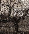 Landschaft bei Plessow, Werder (Havel), Bild 1.jpg